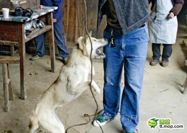 killing_dog_3-Dog abuse in China