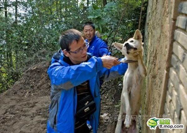 killing_dog_4-Dog abuse in China