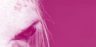 confuciani-paradosso-cavallo-bianco