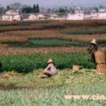 Cresce sempre più l'attenzione per le zone rurali in Cina