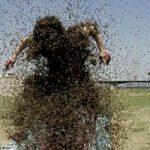 Record senza limiti in Cina: il vestito di api