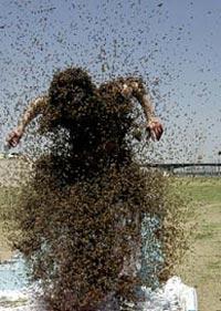 Il vestito di api