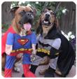Sartoria per cani