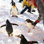 Gara per pinguini