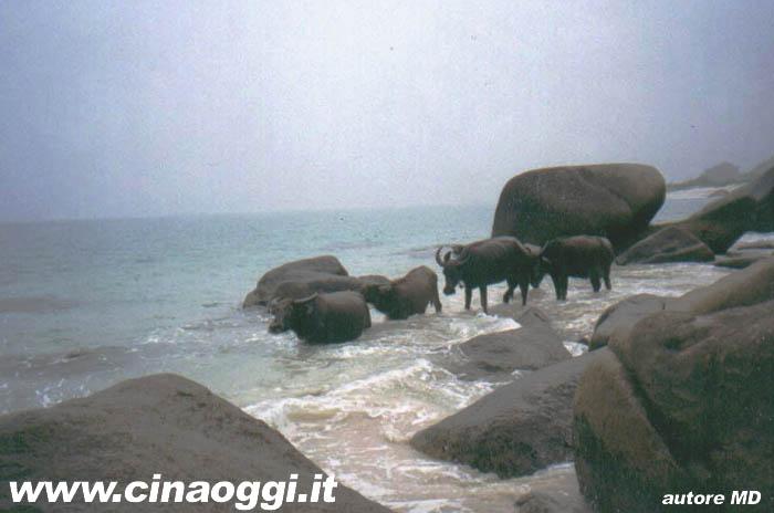 Immagini di Hainan