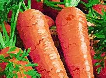 verdure-piccanti-crude