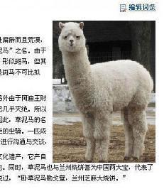 alpaca_original