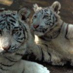 Fossa comune di animali in uno zoo cinese