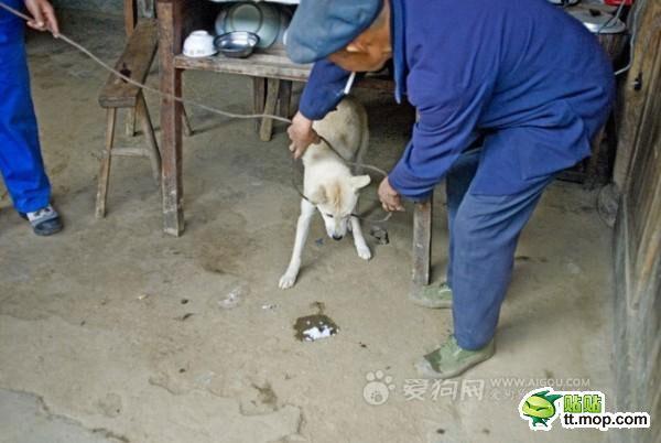 Cani sgozzati in Cina