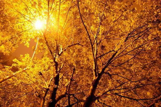 glowing-trees-alberi neon