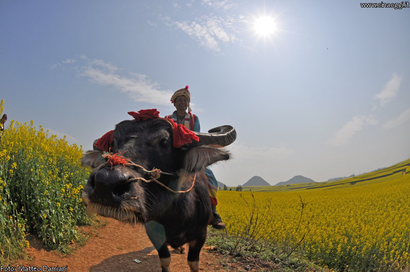 luoping_flowers_yunnan_015