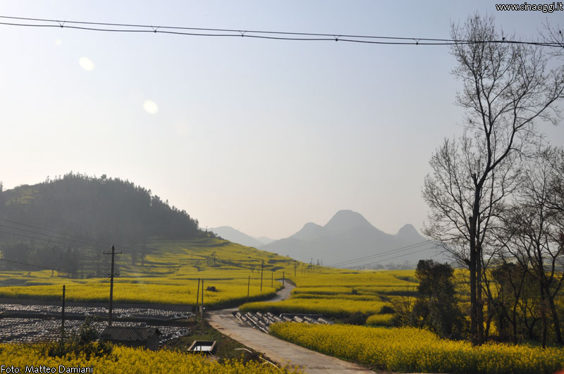 luoping_flowers_yunnan_020