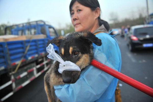 cani-liberazione-000-cani destinati al macello