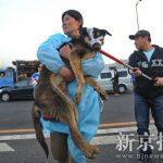 Blitz degli animalisti cinesi libera 500 cani destinati al macello grazie al microblogging