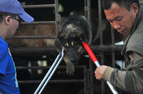 cani-liberazione-008--cani destinati al macello
