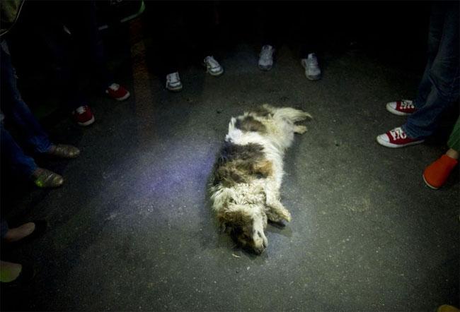 cani-liberazione-011--cani destinati al macello