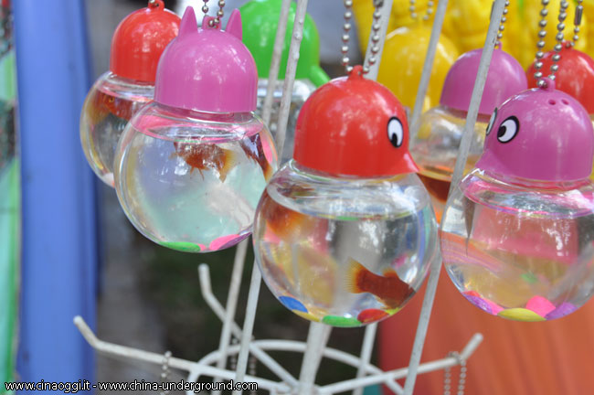 pesce rosso in Cina