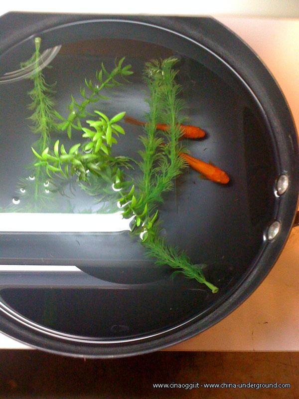 golden-fish-pot