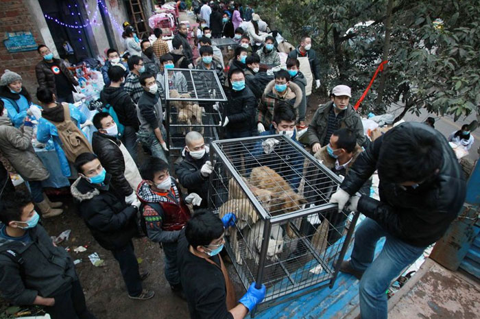 cani salvati in Cina
