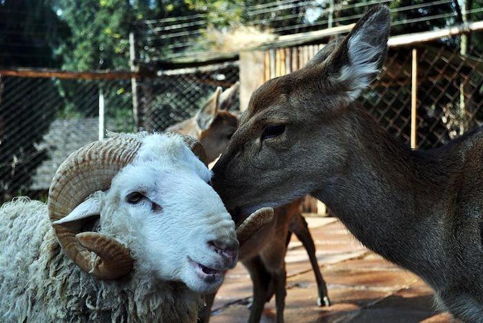 rapporti interspecie
