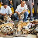 Gli abusi sugli animali derivati dalla Medicina Tradizionale Cinese