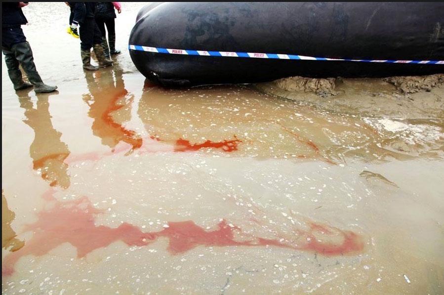 balena spiaggiata in Cina