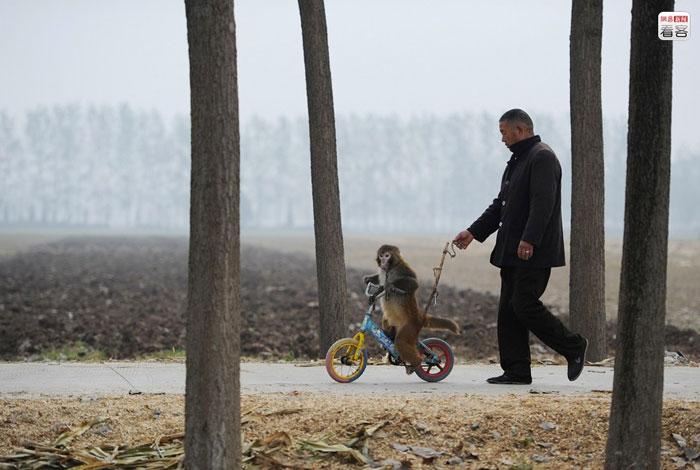 circhi rurali cinesi