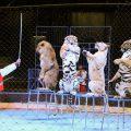 circo cinese
