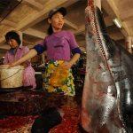 Il mercato degli animali della Medicina Cinese Tradizionale: 20 immagini