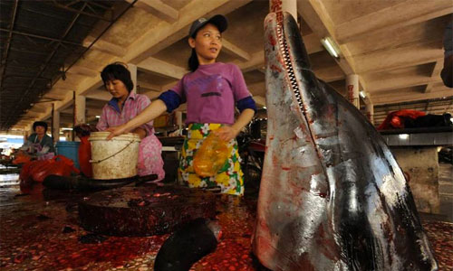 crudeltà sugli animali-abusi sugli animali in Cina
