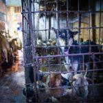 Il festival della carne di cane di Yulin (Immagini non adatte ad un pubblico sensibile)