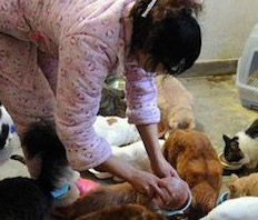gatti randagi in Cina - gattara cinese