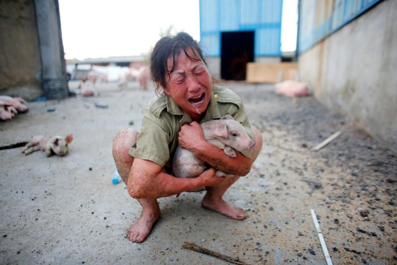 Una donna in lacrime, stringe un maialino salvato da un'inondazione a Xiaogan, nella provincia dello Hubei. REUTERS/Darley Shen