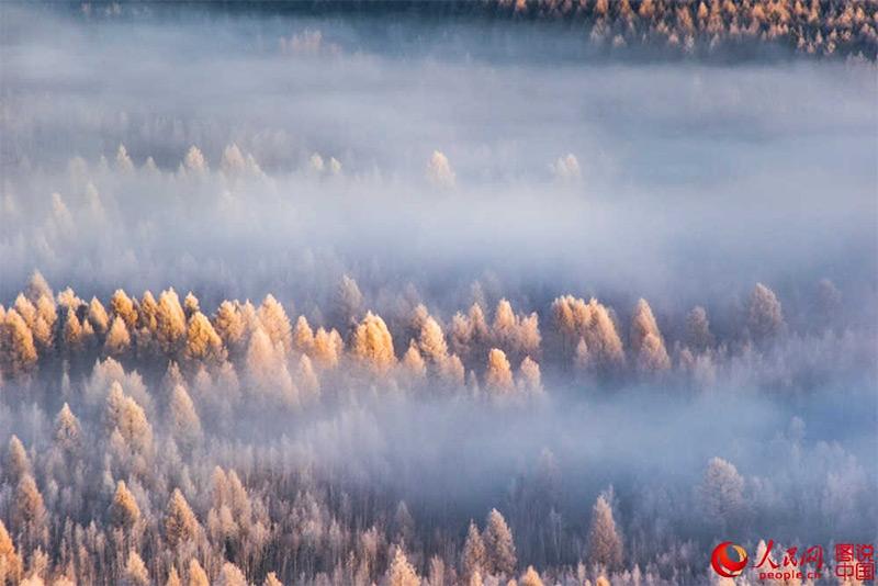 foresta di Dahinggan