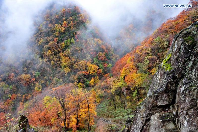 La foresta è abitata da scimmie, tigri del Sud della Cina, aquile dorate e salamandre giganti. Orsi e scimmie albine si possono trovare nella foresta di tanto in tanto.