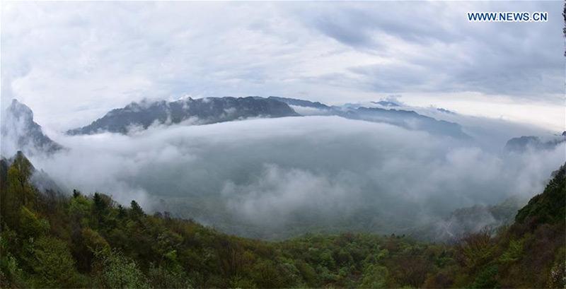 Shennongjia, grazie al suo sviluppo verticale, comprende vegetazione subtropicale, temperata e temperata fredda.