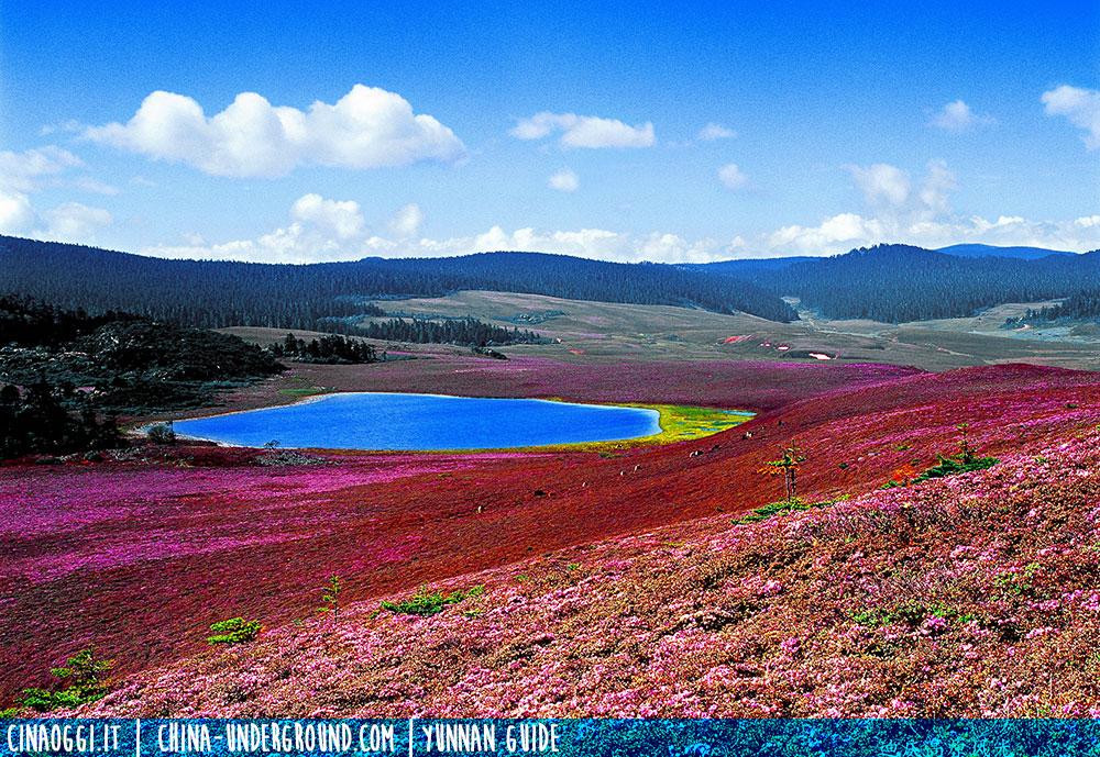 altopiano tibetano