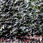 Viaggio a Kunming, la Citta dell'Eterna Primavera (Capitale dello Yunnan)