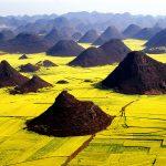 Viaggio a Qujing, Benvenuti nel Mare Dorato di Luoping