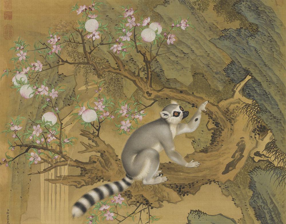 Giuseppe Castiglione-lemure