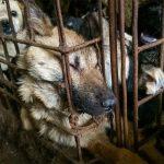 Una gang cinese accusata di vendere frecce avvelenate per uccidere cani