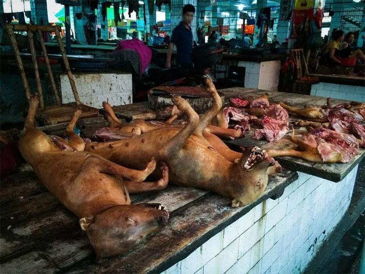 yulin-festival-della-carne-di-cane