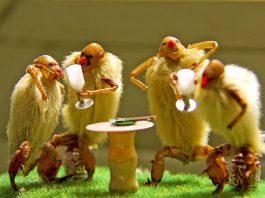 scimmie pelose cina
