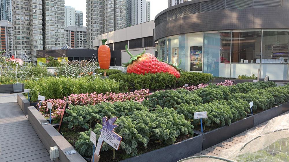 Rooftop Farm at Metroplaza Shopping Mall Photo Credit Rooftop Republic Natalie Lam